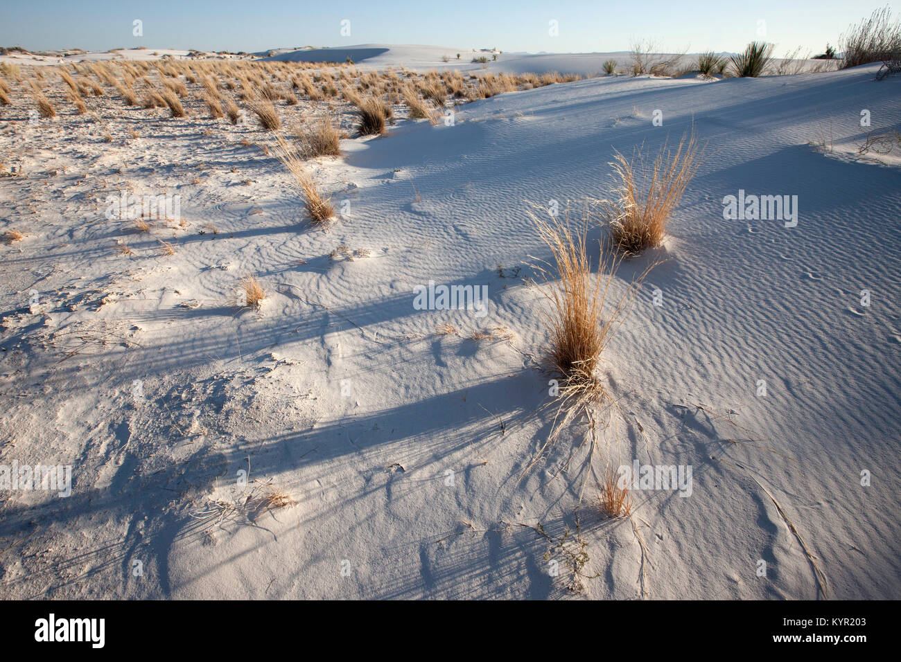 Sand and seasonal grasses lay in wait for summer rains, White Sands National Monument, New Mexico - Stock Image