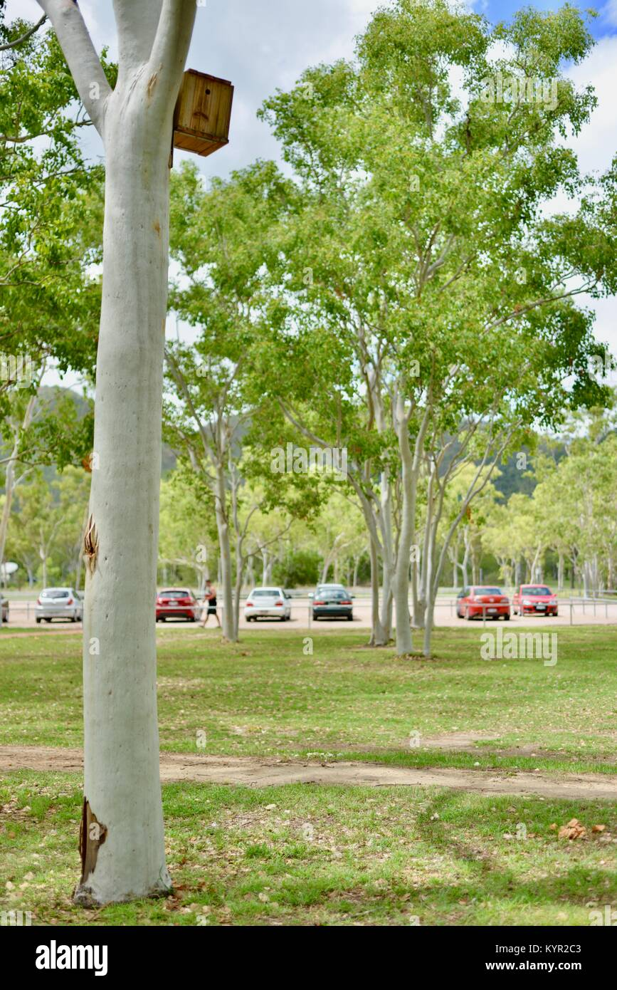 Nest boxes and wildlife habitats attached to gum trees at James Cook University, Townsville, Queensland, Australia - Stock Image