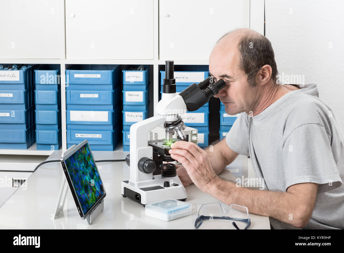 Senior male scientist or tech observes sample under the microscope - Stock Image