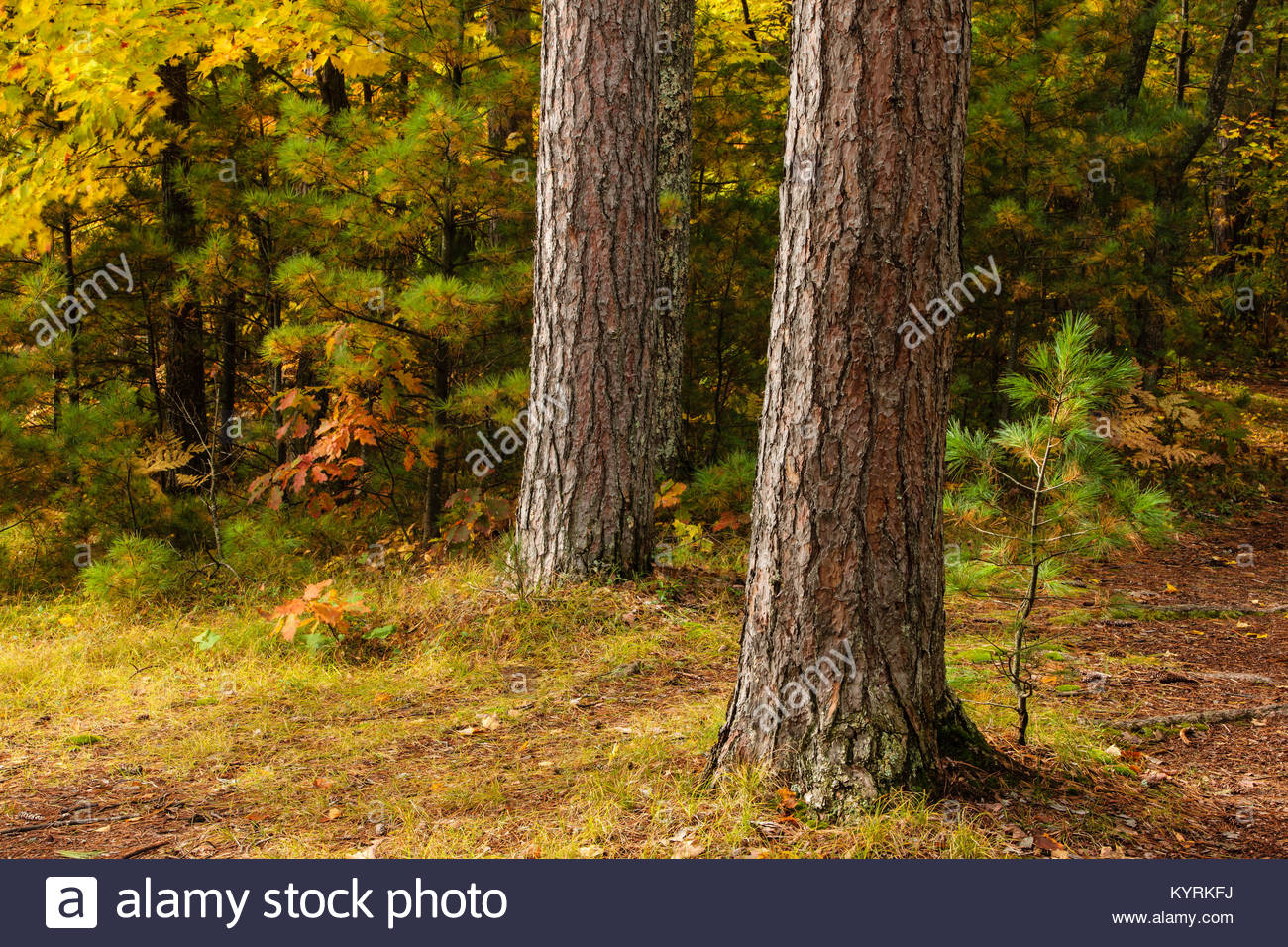 Autumn Colors In Vilas Park Lagoon >> The Forest Within Firefly Lake State Park Near Sayner Wisconsin In