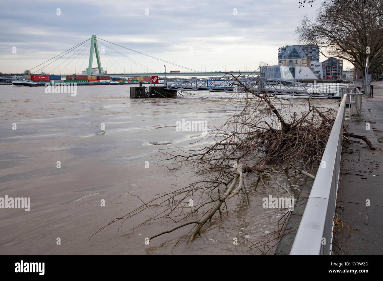Cologne, Germany, 10. January 2018, flood of the river Rhine, flotsam on the bank.  Köln, Deutschland, 10. - Stock Image