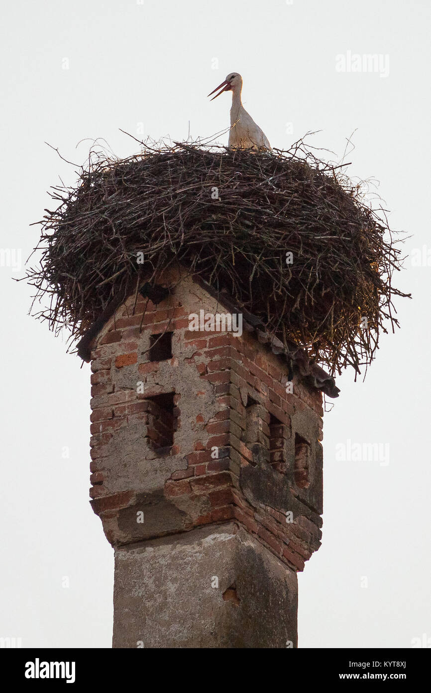 Stork nest on chimney - Stock Image