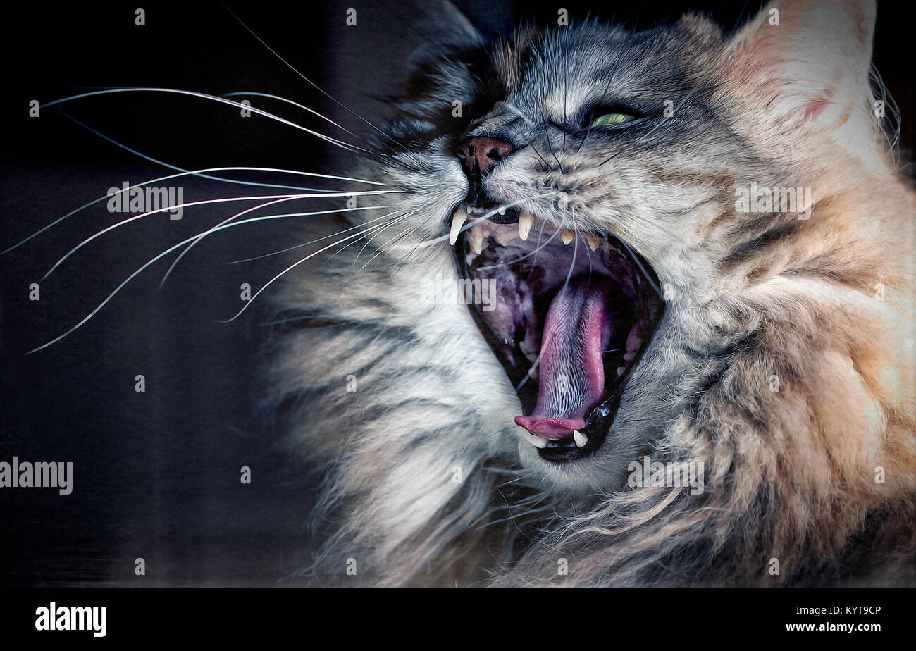 Angry cat or - Stock Image