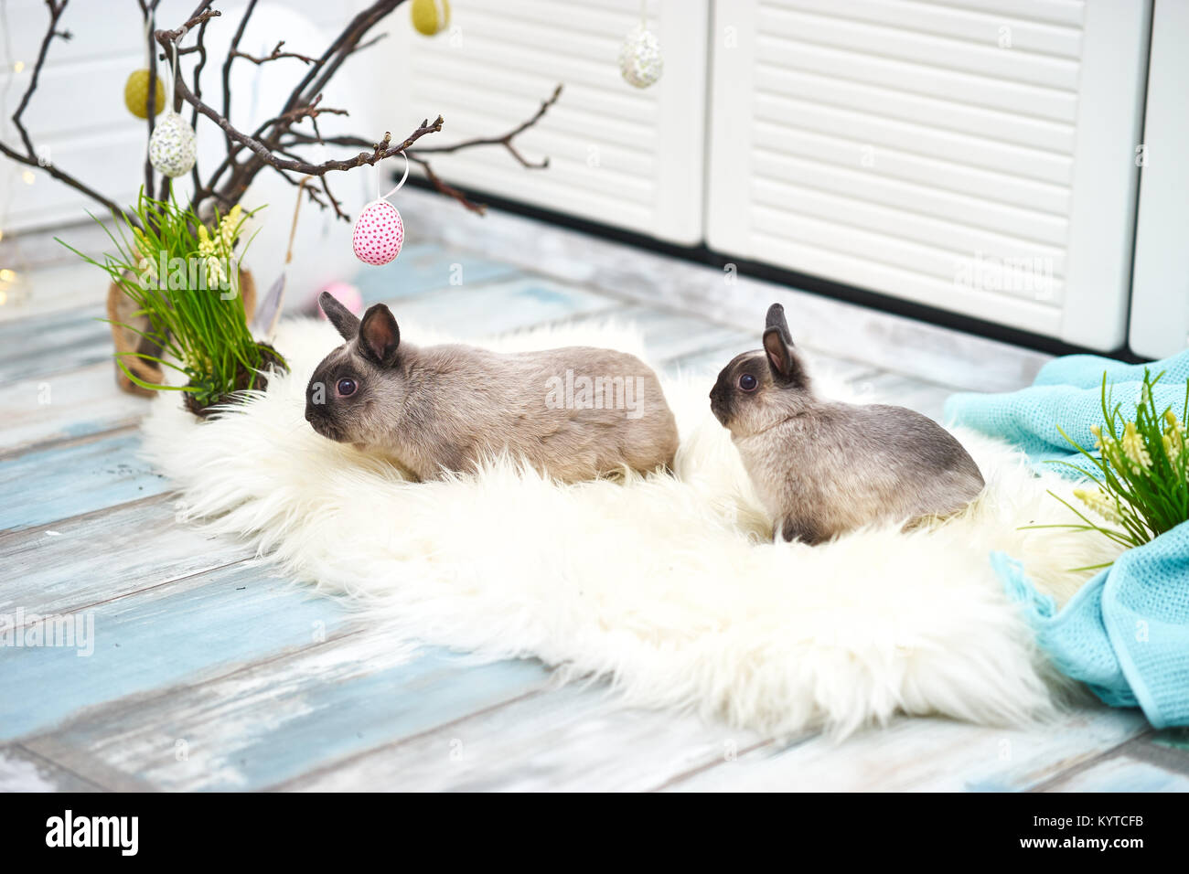Studio Shot Of Two Cute Bunnies In Light Room With Easter