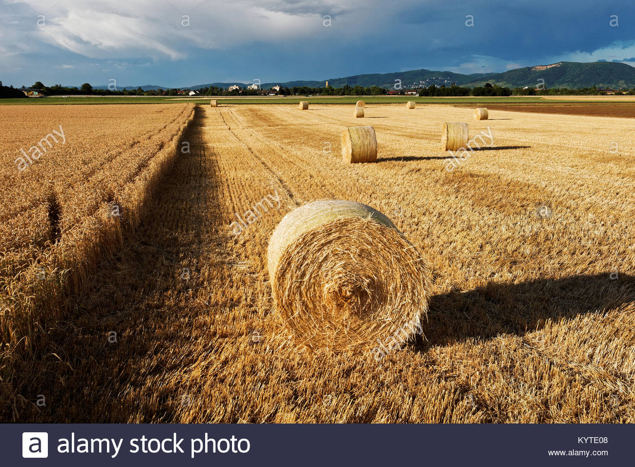 Hay Rolls On Harvested Field In Friedrichsfeld Sud Mannheim Stock