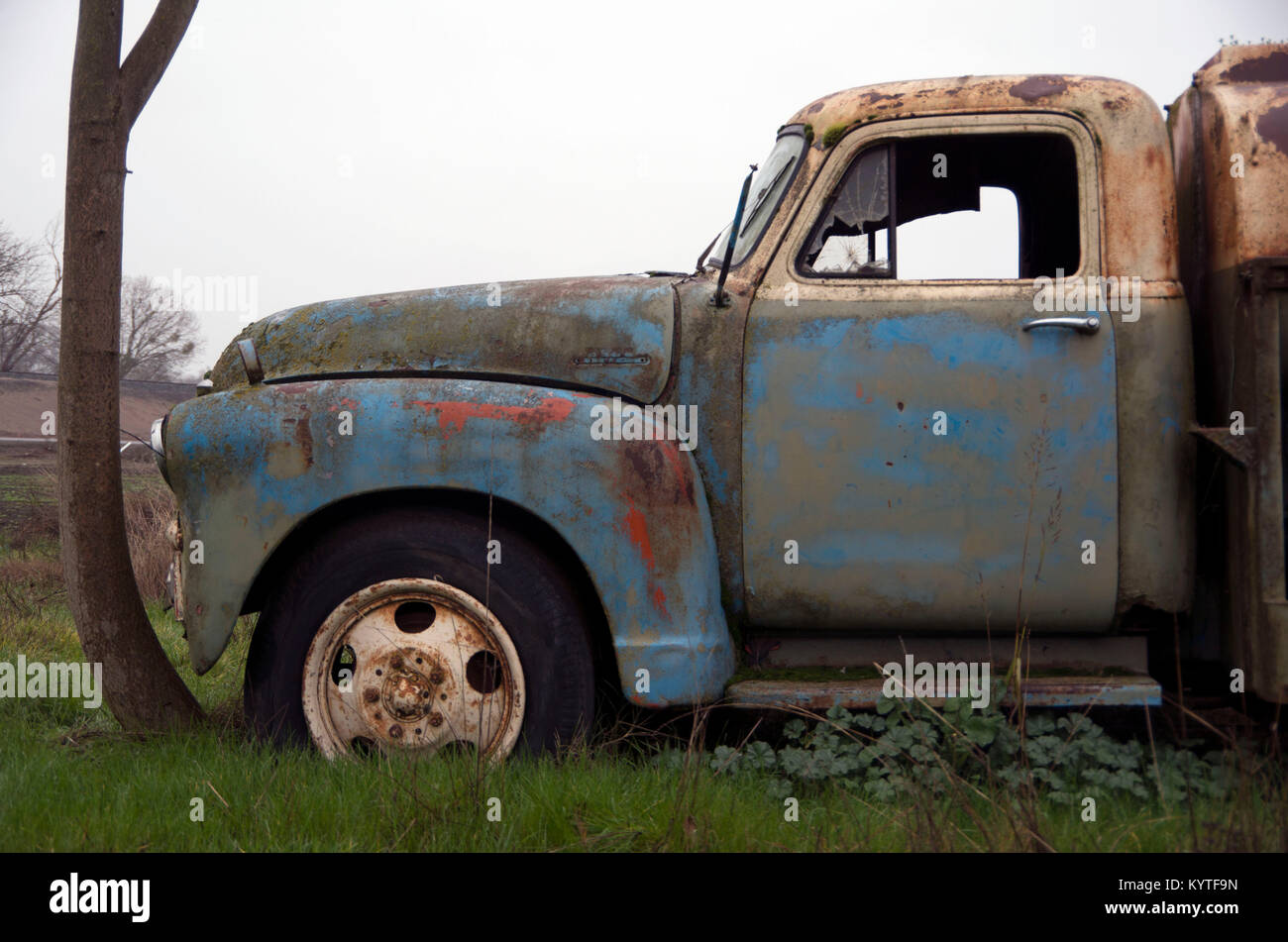 An old Chevy truck has been sitting in one spot for so long that a tree trunk has grown around it. Stock Photo