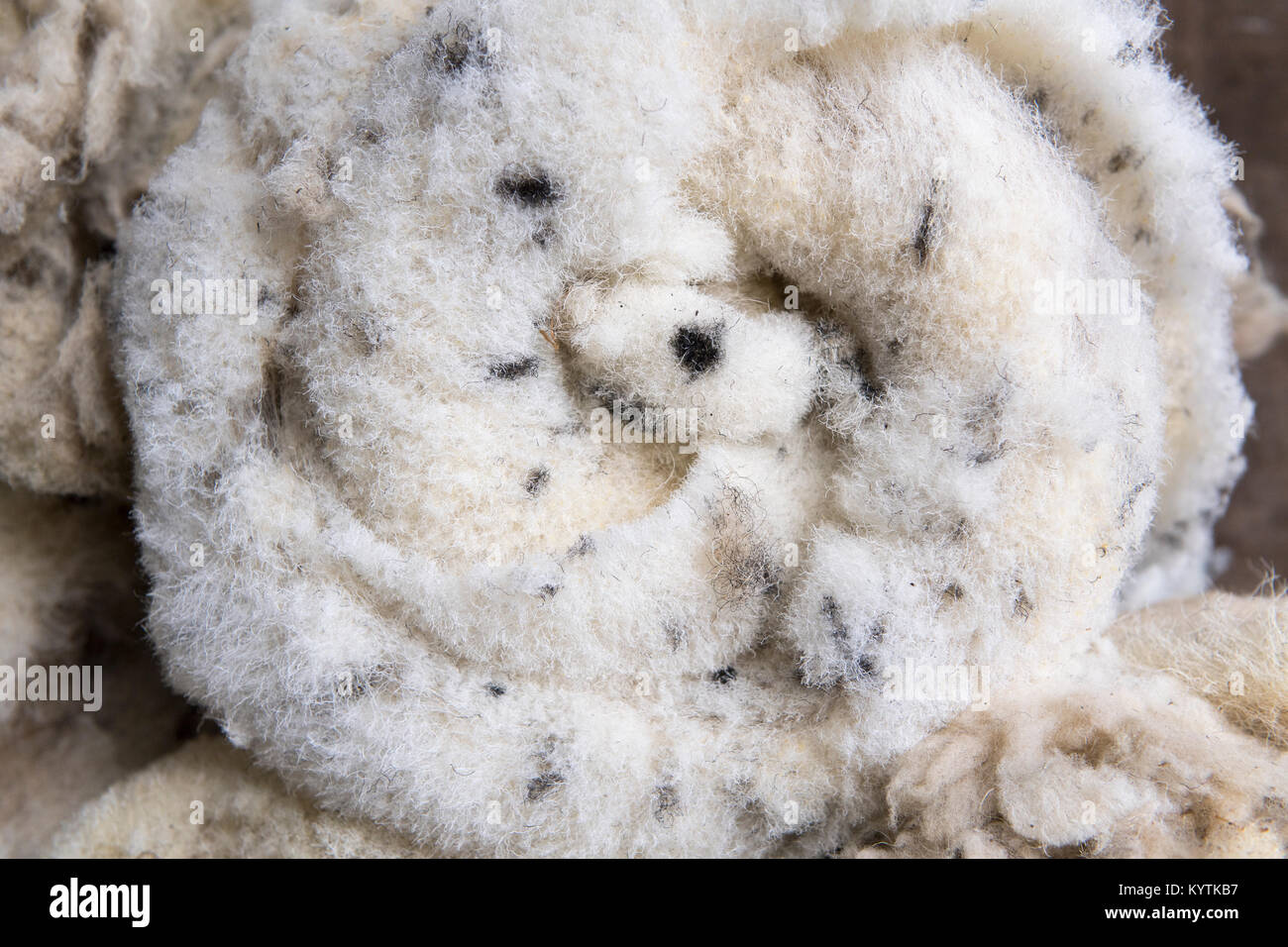 Newly clipped fleeces of wool off swaledale ewes. Yorkshire, UK. - Stock Image