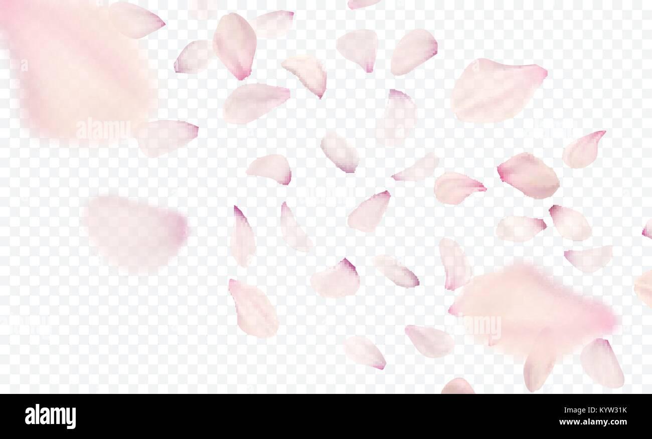 Pink sakura falling petals background. Vector illustration - Stock Image