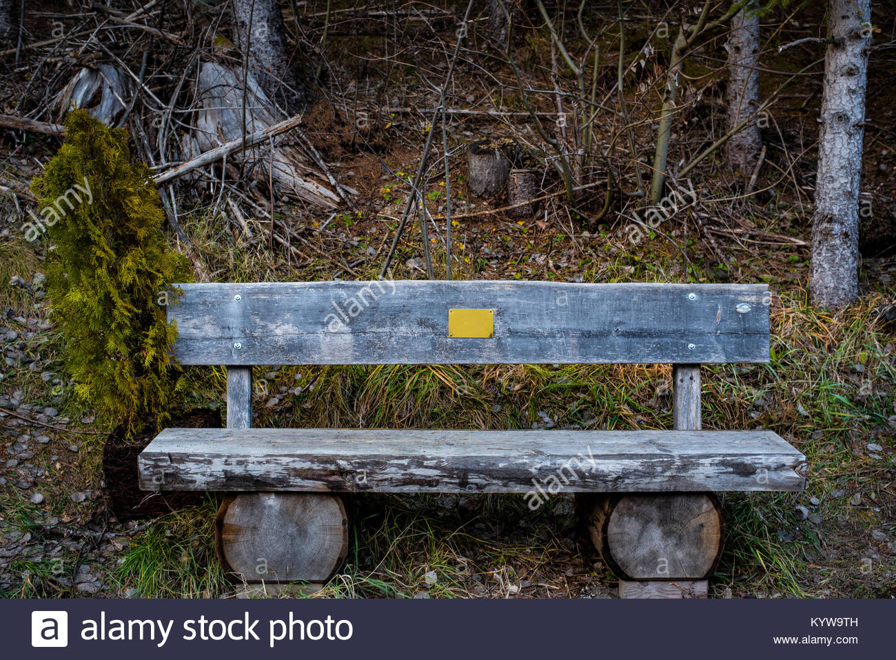 In the Woods - Stock Image
