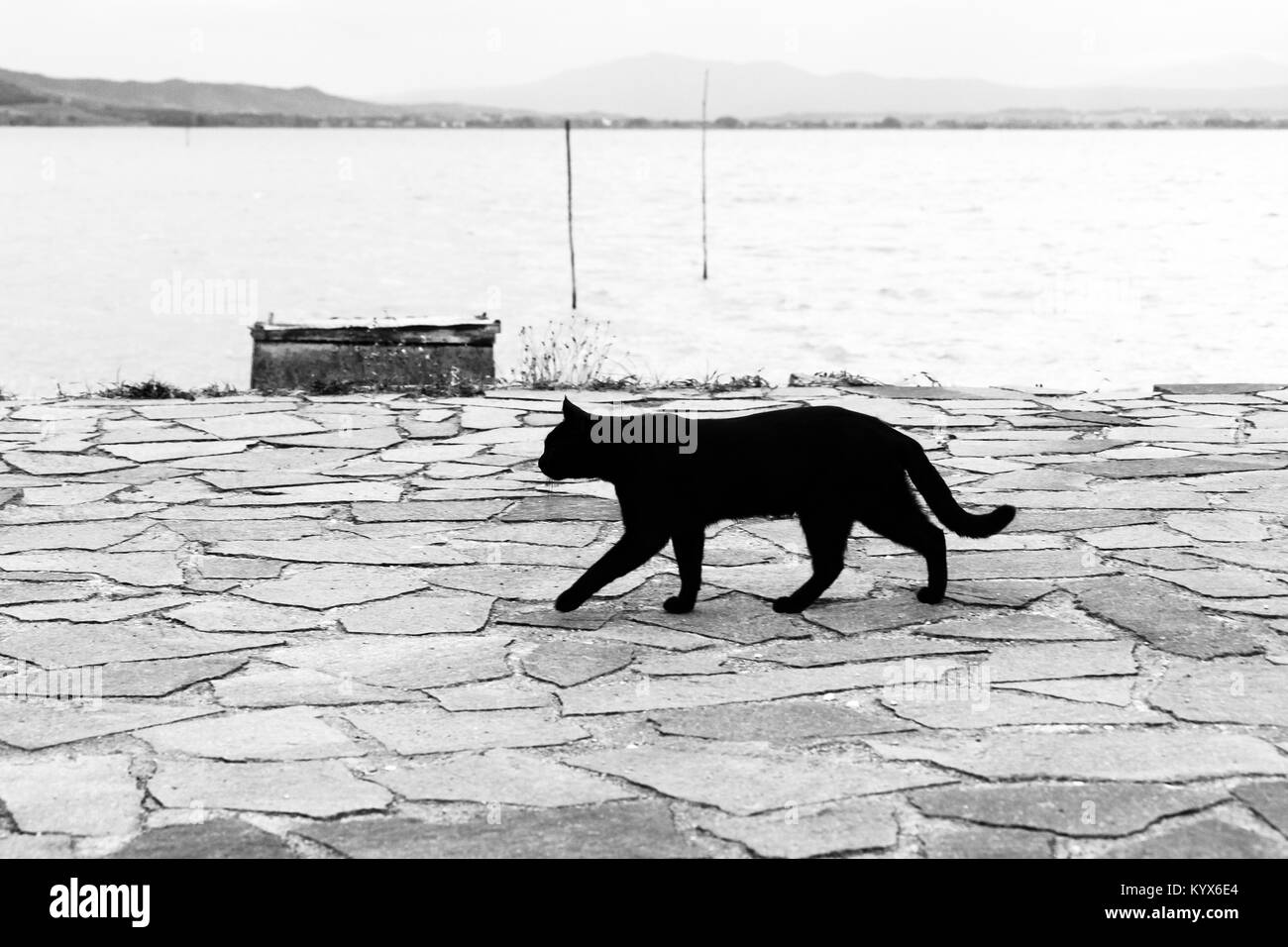 A black cat walking on a pier on Trasimeno lake (Umbria) - Stock Image