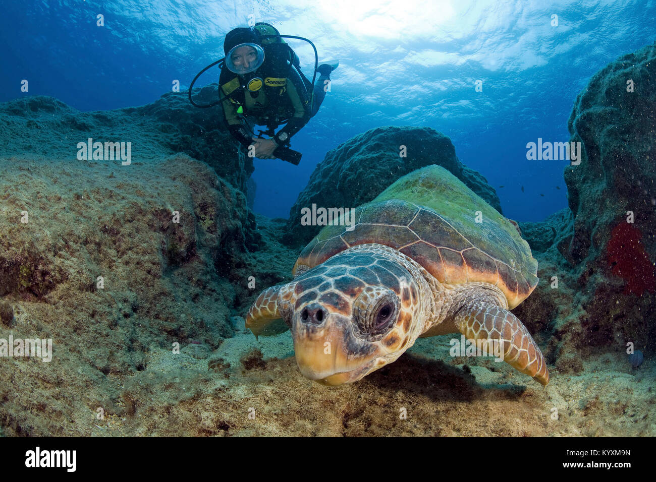 Scuba diver and Loggerhead seaturtle (Caretta caretta), Kas, ancient Lycia, Turkey, Mediteranean sea, Europe Stock Photo