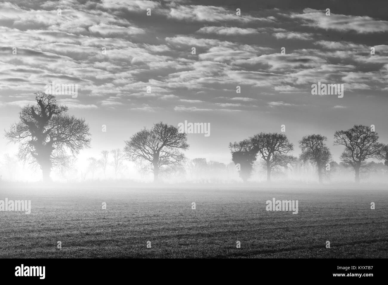 Sunrise on a cold frosty morning with a mist on the ground. - Stock Image