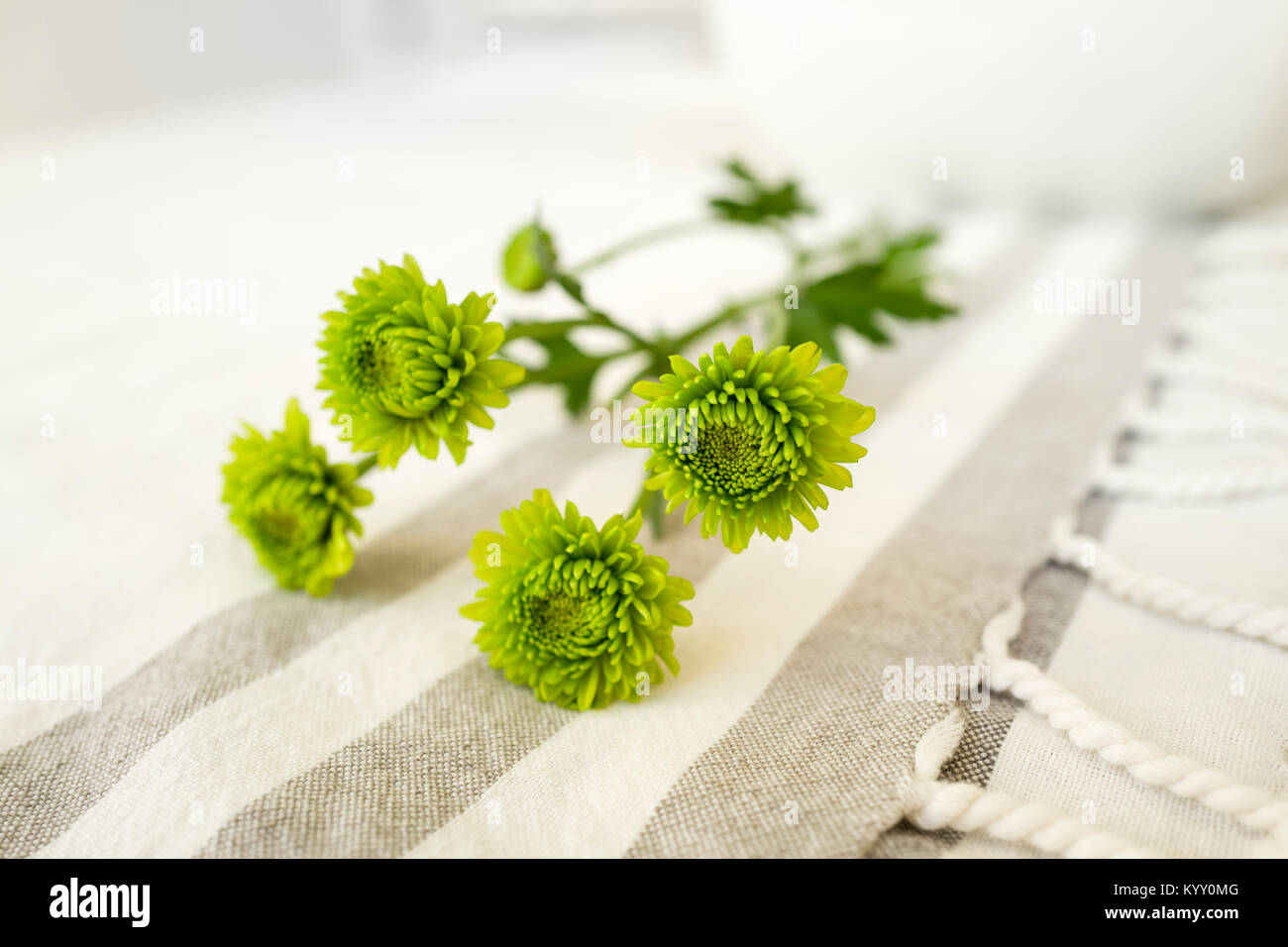 Close-up of flowers on bed - Stock Image
