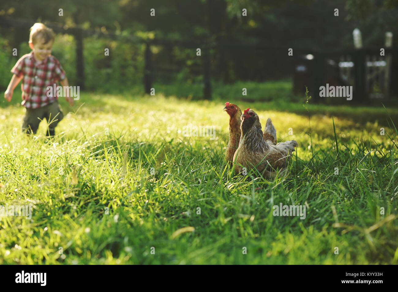Boy on field with hens in foreground - Stock Image
