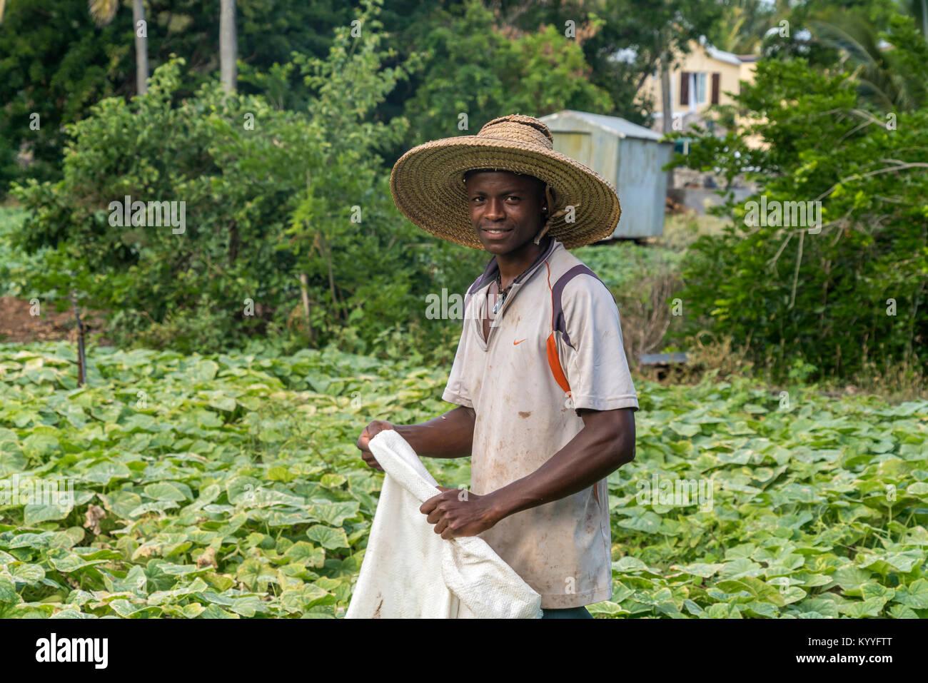 Afrikanischer Bauer auf seinem Feld,  Saint Francois, Insel Rodrigues, Mauritius, Afrika,  | african farmer on his - Stock Image