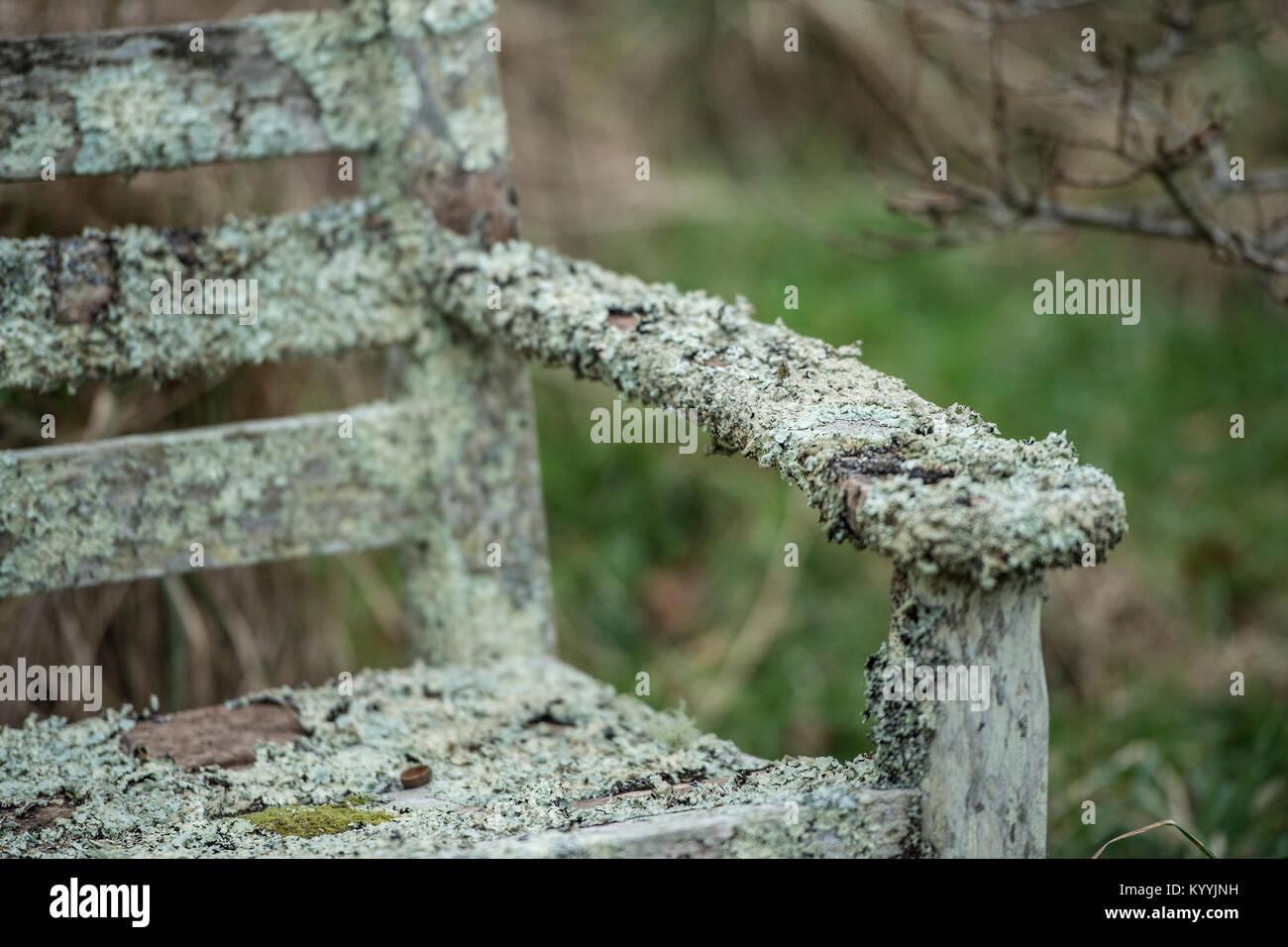 lichen on garden chair - Stock Image