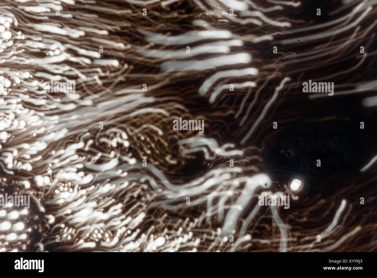 Intentional blur movement of fizzy soda bubbles moving though liquid water creating an abstract blurred image of - Stock Image