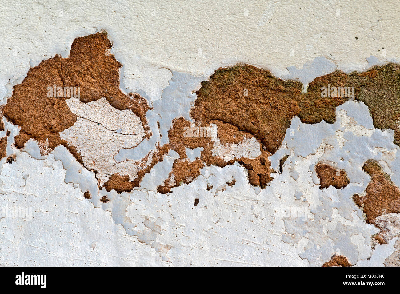 Close up of green mold fungus and peeling and flaking paint due to rising damp and lack of maintenance on exterior - Stock Image