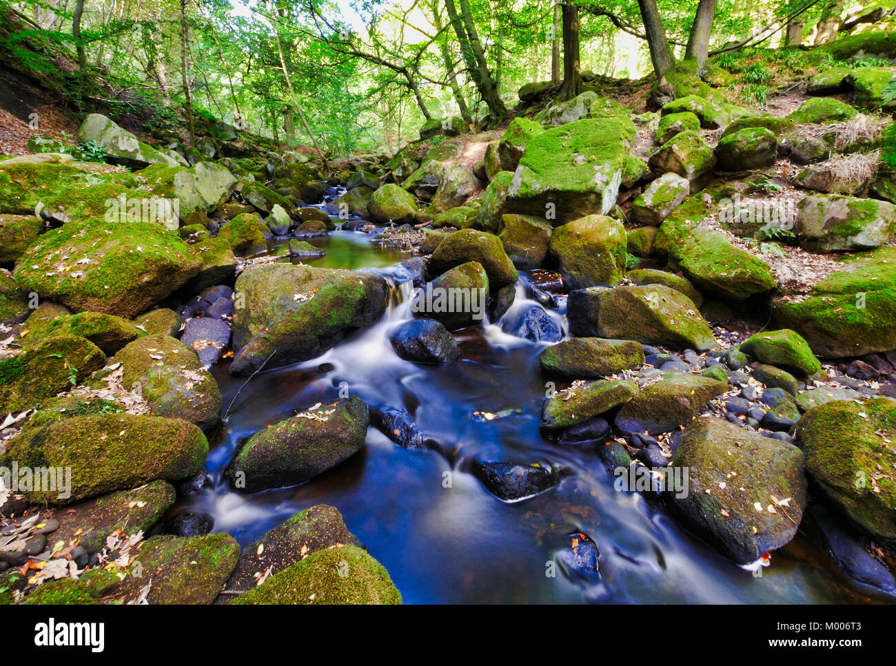 UK Weather: Autumn leaves starting to turn and fall in the stunning scenic Padley Gorge, Grindleford, Peak District - Stock Image