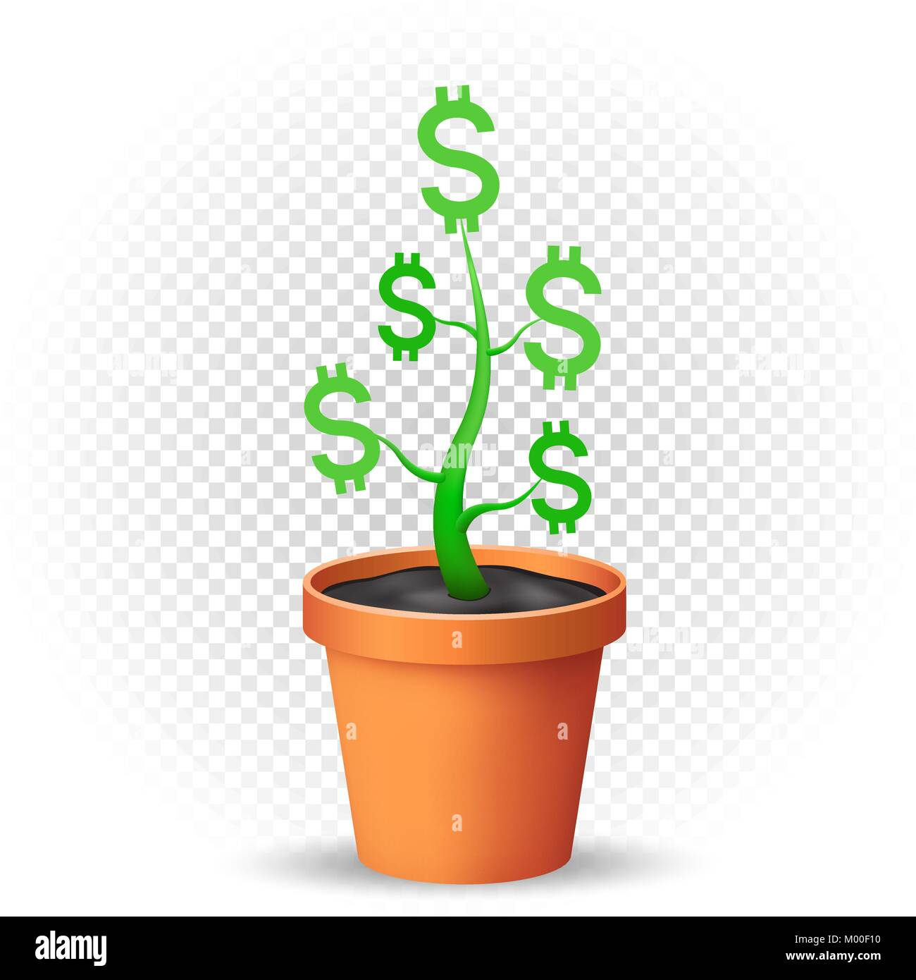 dollar plant grows in flowerpot - Stock Image