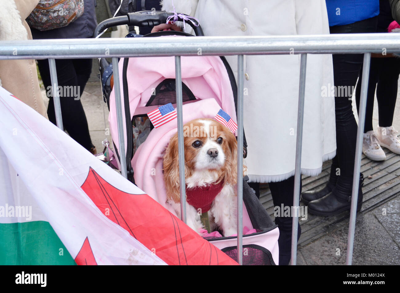 Cardiff, UK. 15th Jan, 2018. Camilla the dog is one of the first inline at Cardiff Castle ahead of His Royal Highness Stock Photo