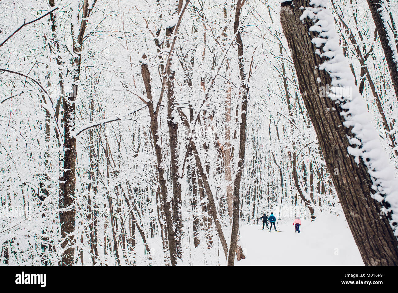 Nordic skier on the white winter forest covered by snow - concept photo for winter olympic game in pyeongchang in Stock Photo