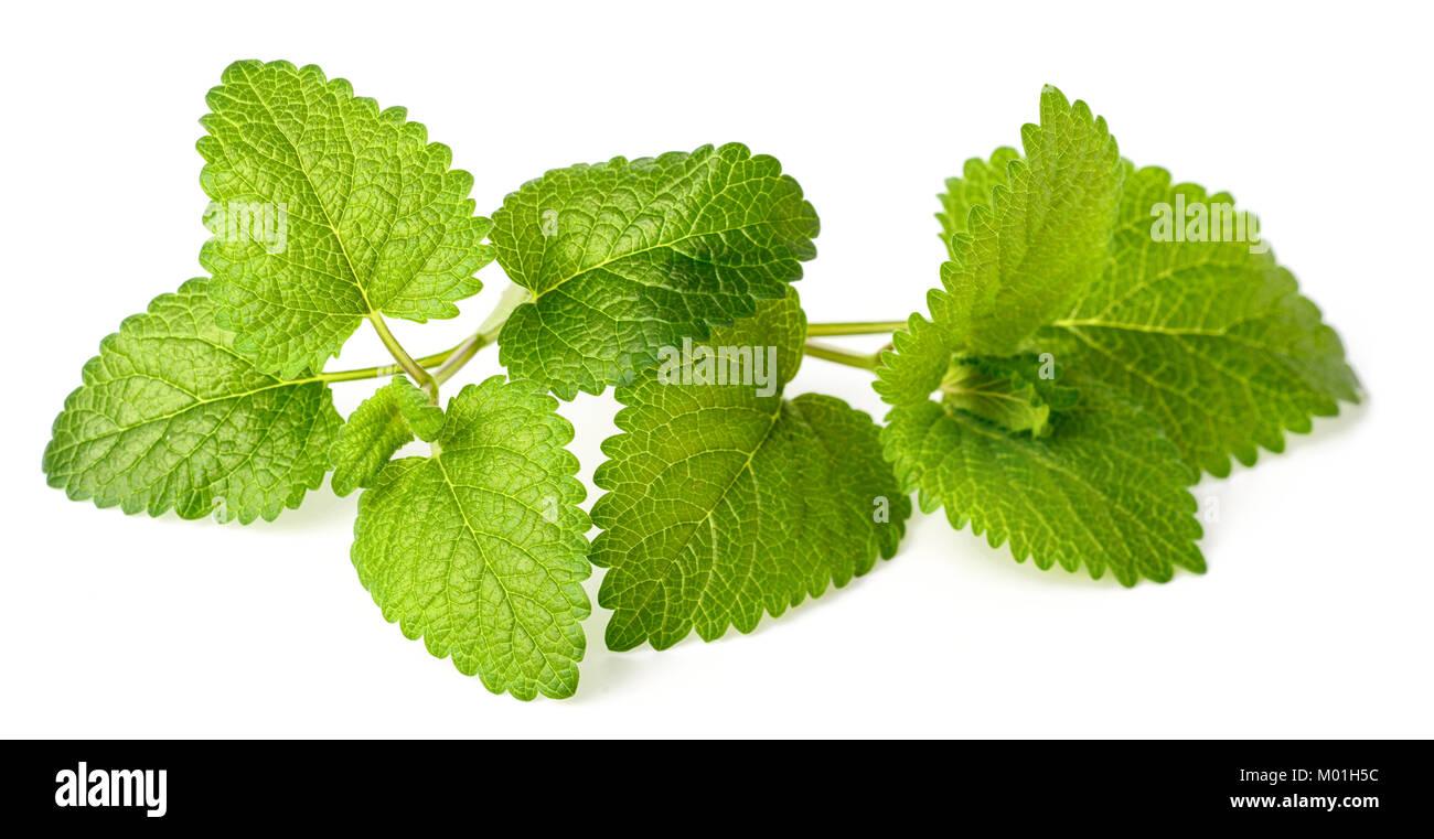 fresh lemon balm herbs isolated on white Stock Photo