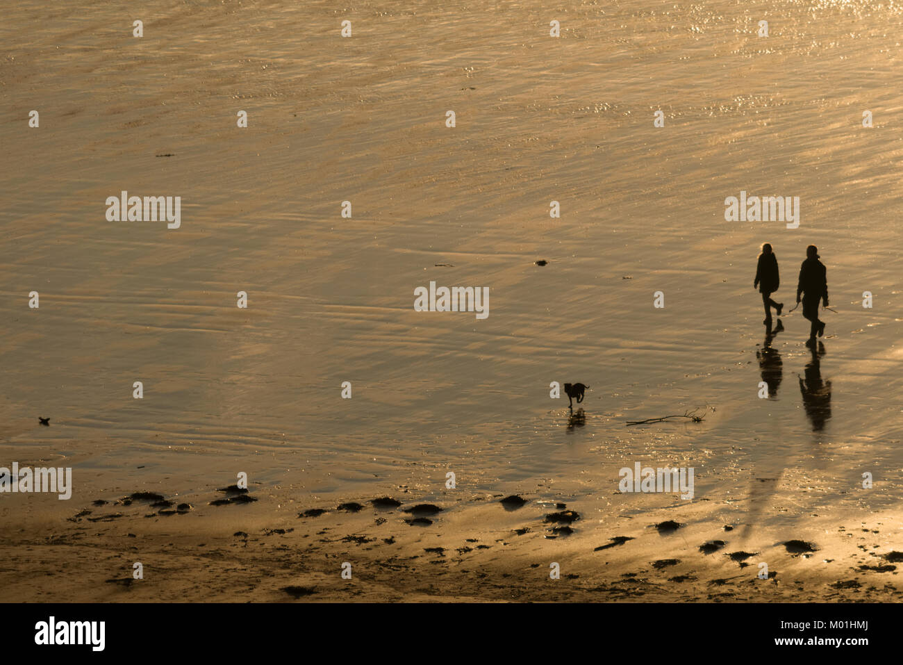 Silhouette of a man and woman (couple) walking on the beach with their dog at sunset. Stock Photo