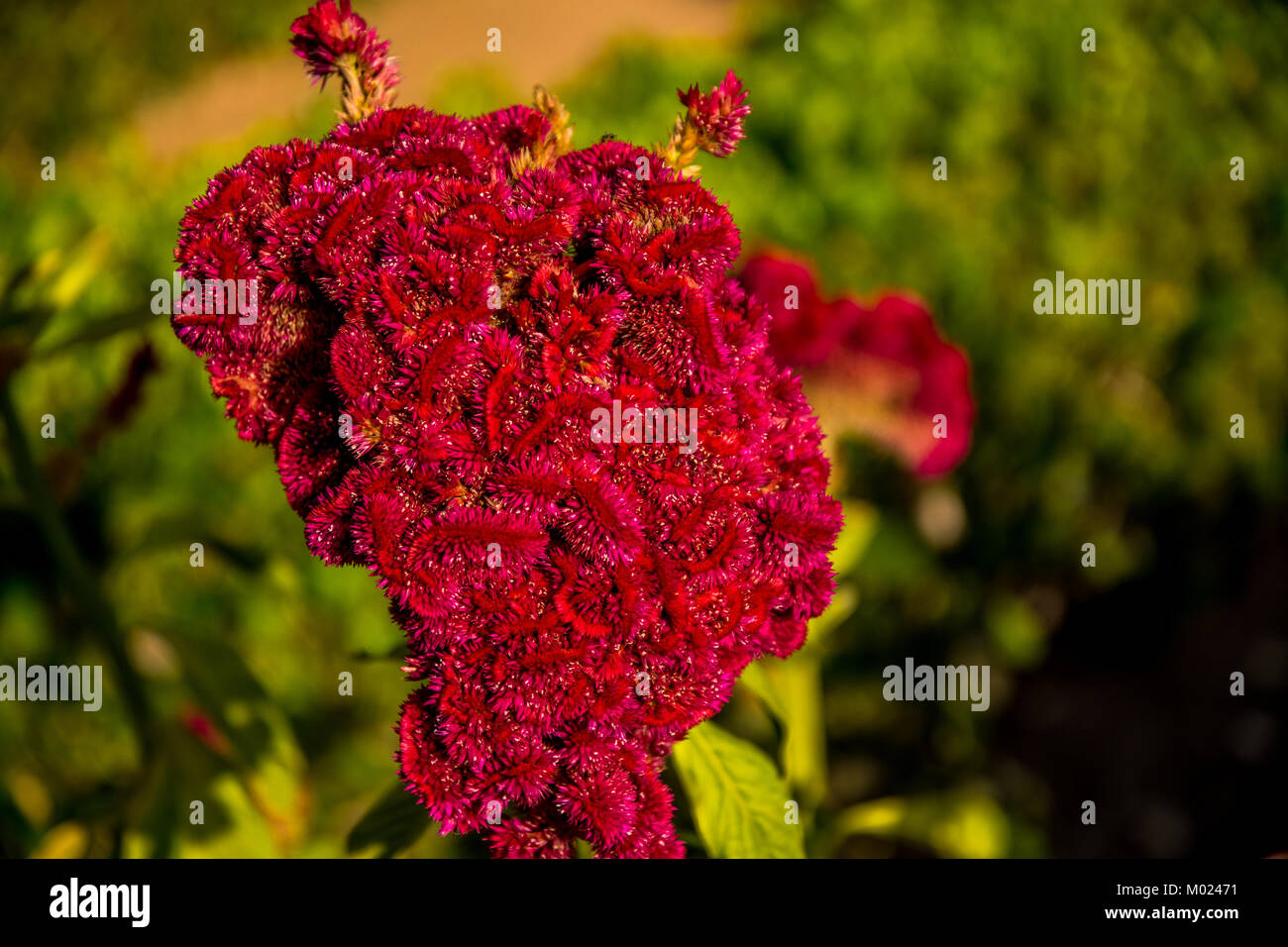 CORDOBA, ANDALUSIA / SPAIN - OCTOBER 14 2017: RED FLOWER Stock Photo