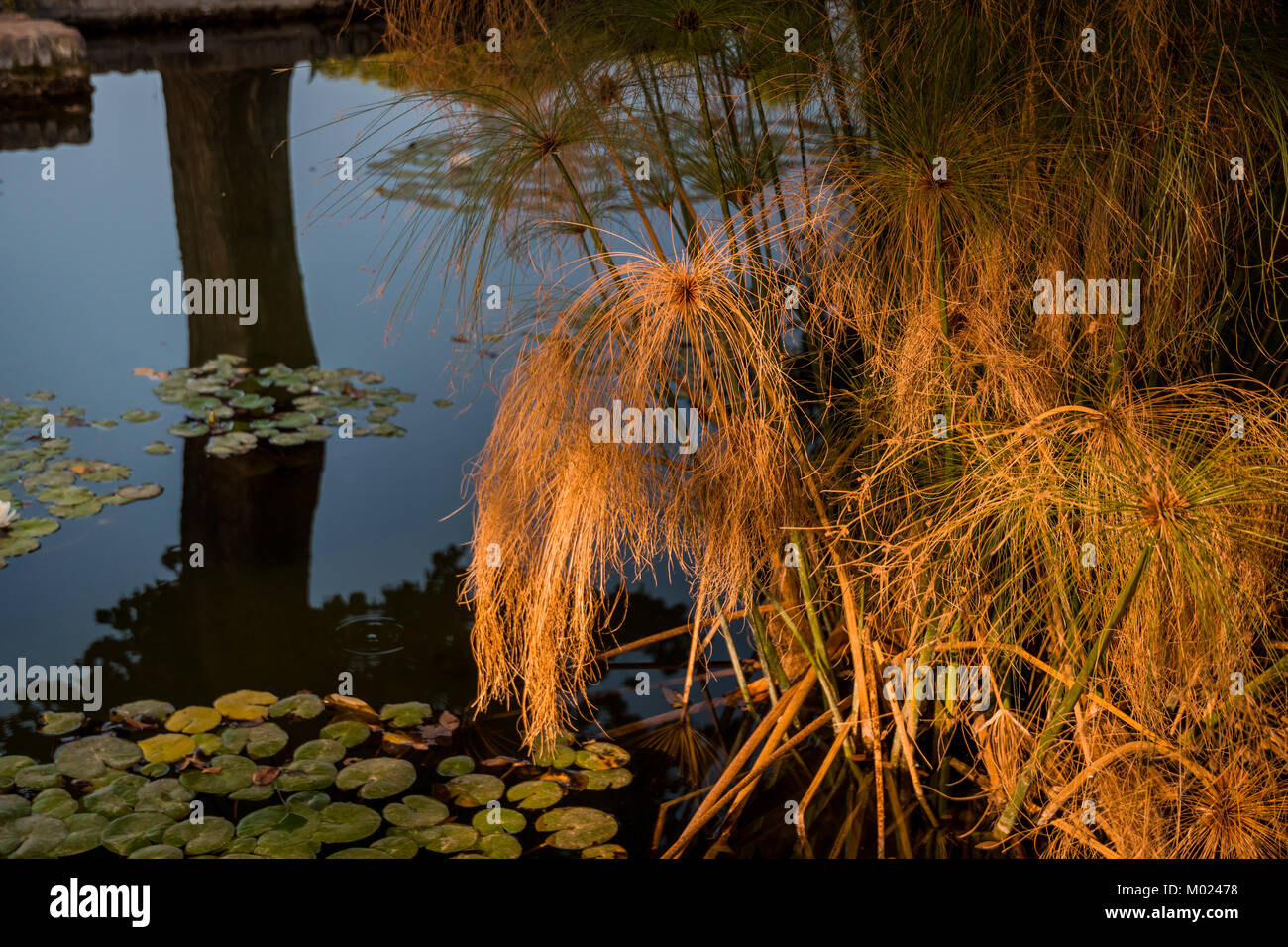 CORDOBA, ANDALUSIA / SPAIN - OCTOBER 14 2017:  GRASS IN WATER - Stock Image