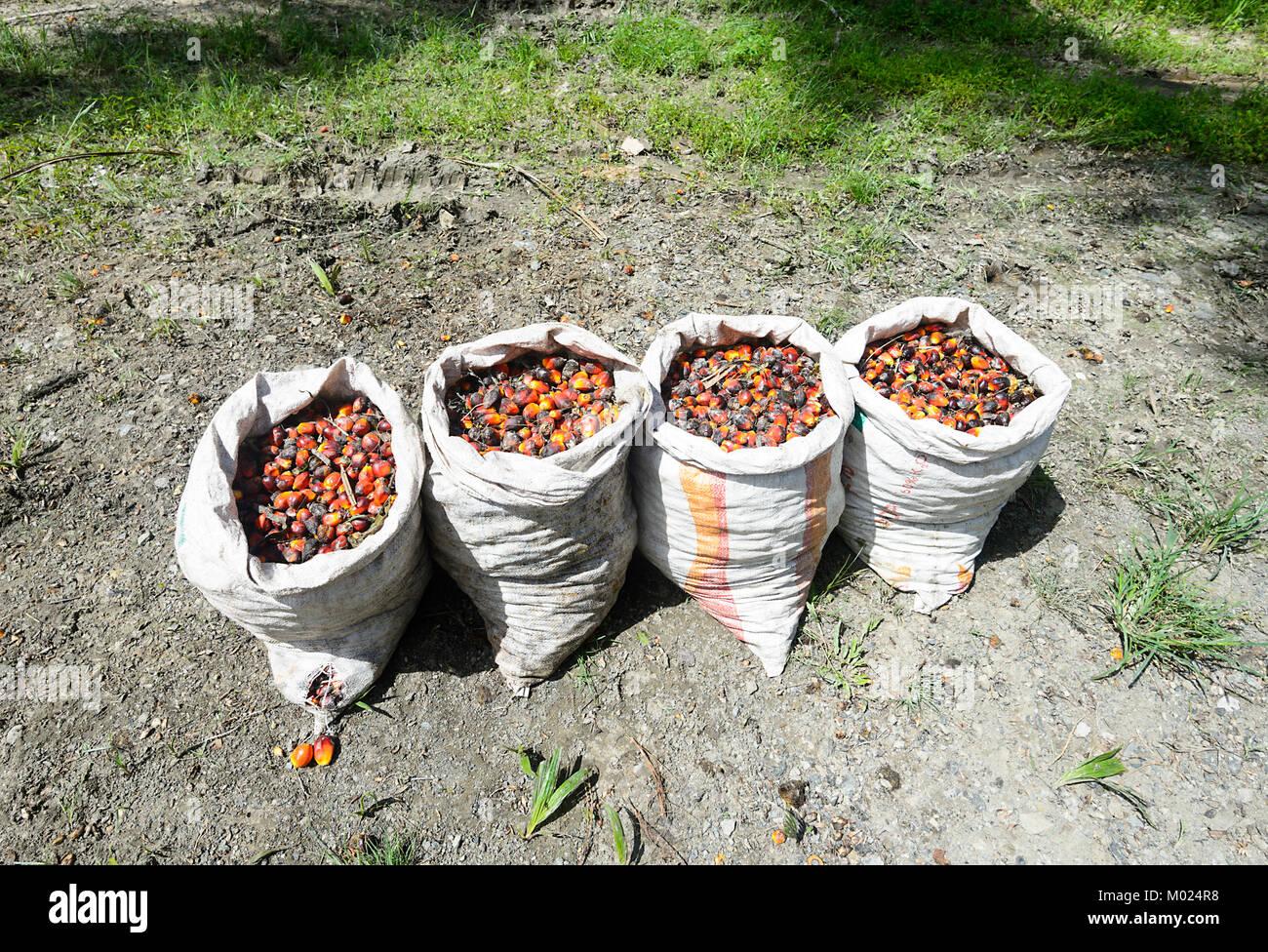 Malaysian Fruit Stock Photos & Malaysian Fruit Stock Images - Alamy