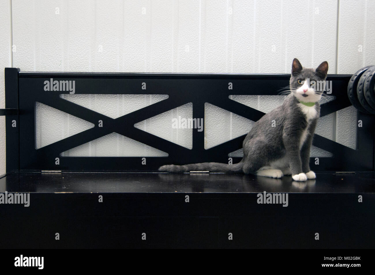 A cat sits on the bench in the animal shelter. - Stock Image