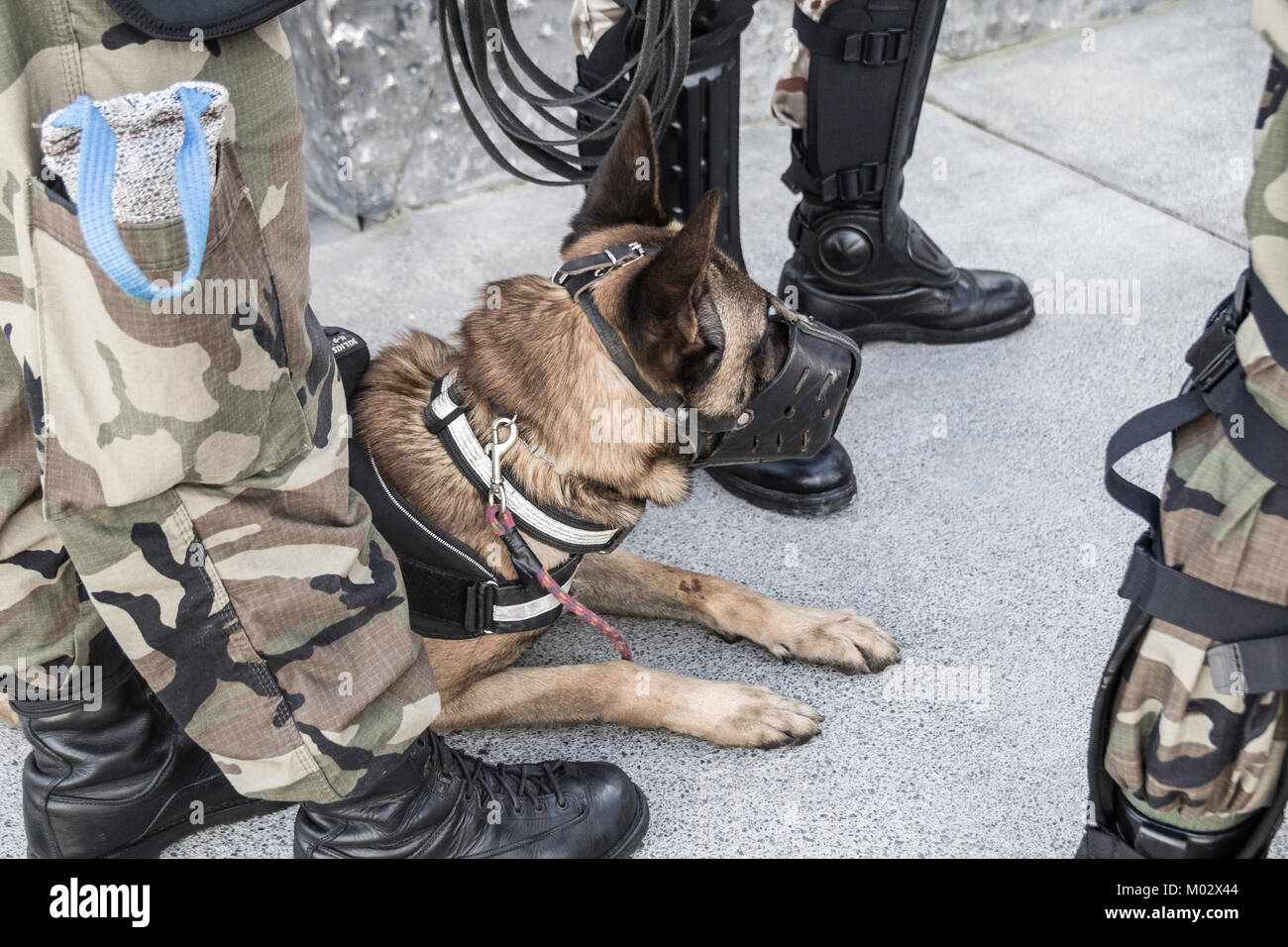 Military personnel with sniffer dog. Spain - Stock Image