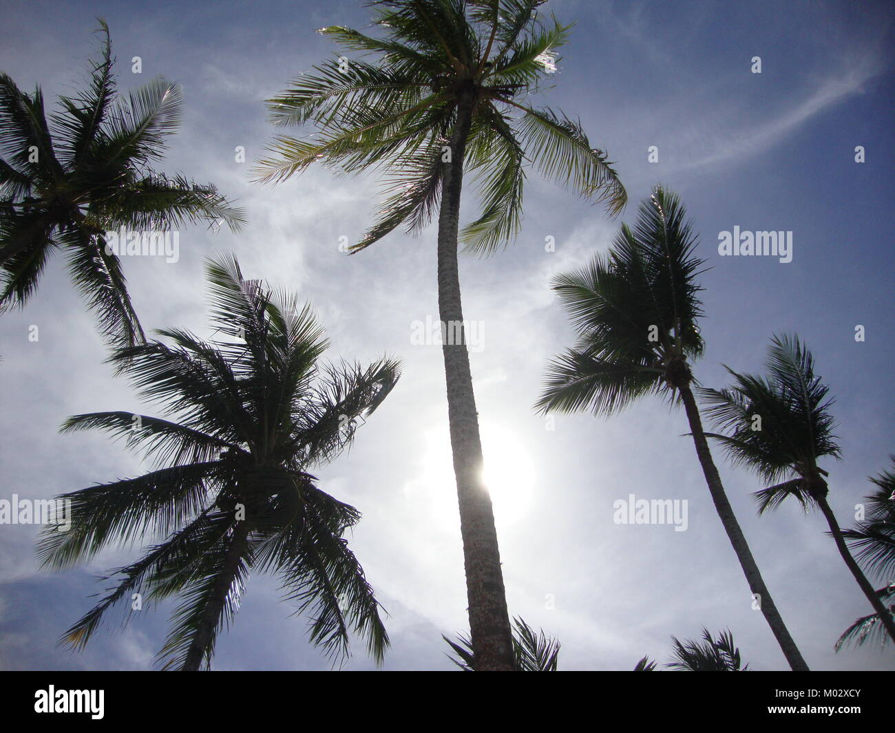 Brazilian palm trees againt the sun - Stock Image