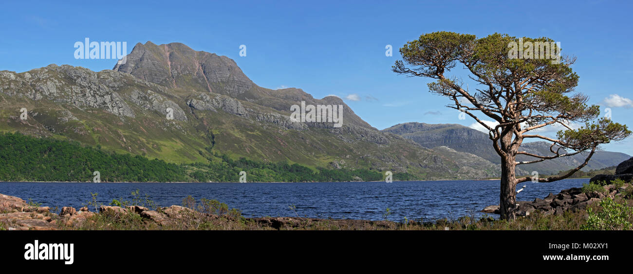 Scots pine tree (Pinus sylvestris L.) on the shores of Loch Maree and the mountain Slioch, Wester Ross, Scottish - Stock Image
