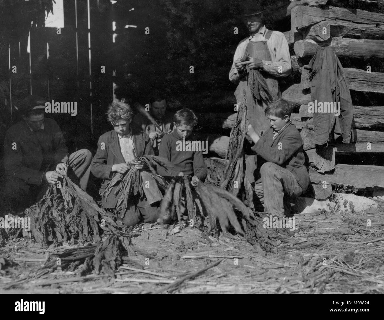 Family of J.H. Burch, stripping tobacco - Stock Image