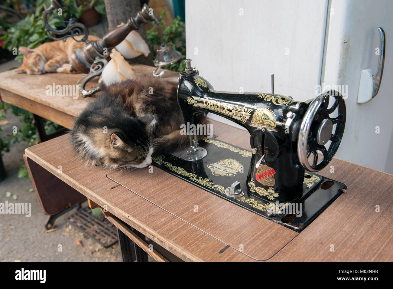 Cats sleeping next to antique sewing machine - Stock Image