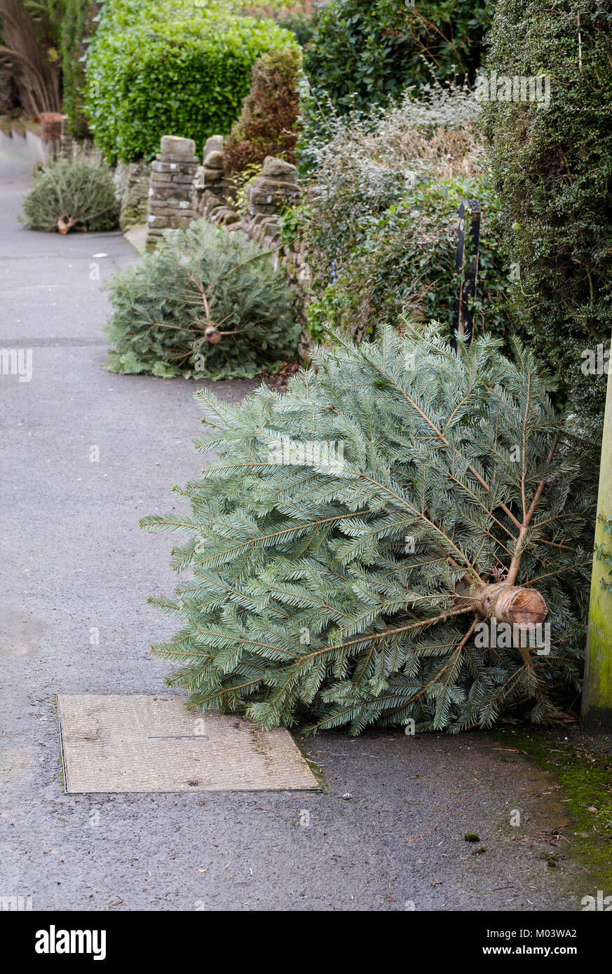 Bristol UK, Thurs 18th Jan 2018. Christmas is well and truly over as a row of household Christmas Trees line the - Stock Image