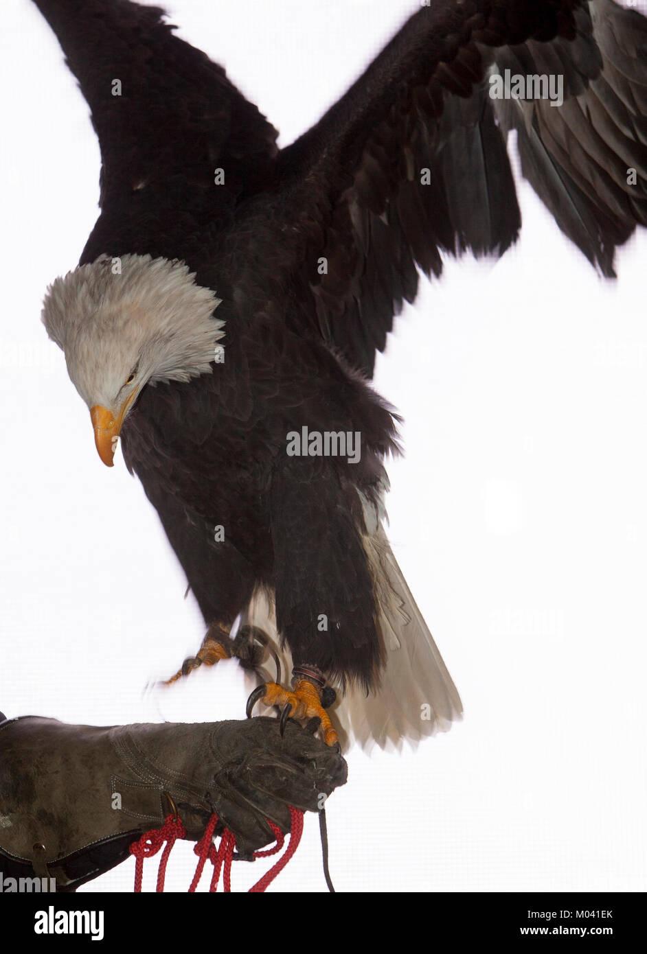 Edinburgh, Scotland. 18th January, 2018. Edinburgh, Scotland, 53rd Wildlife Photographer of the Year Exhibition. - Stock Image