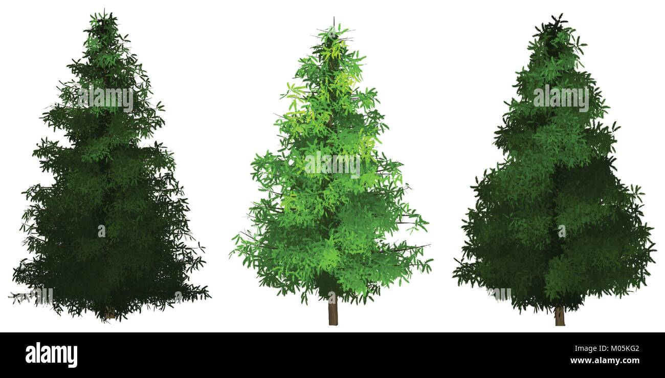 set of 3 painted spruce vectors - Stock Vector