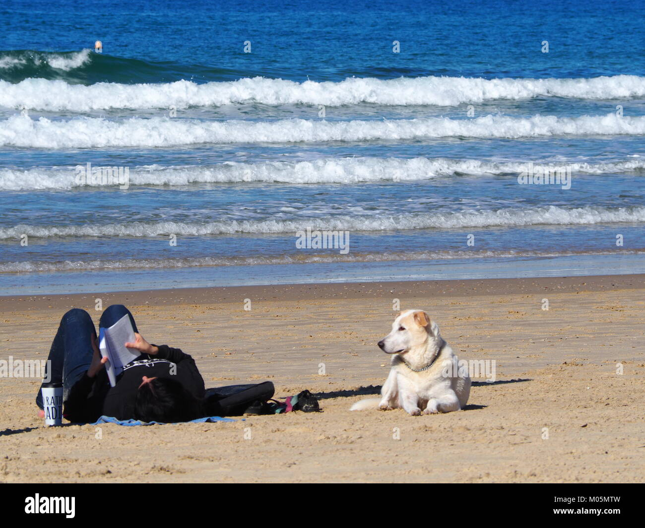 a girl and her dog recreating on the beach reading a book - Stock Image