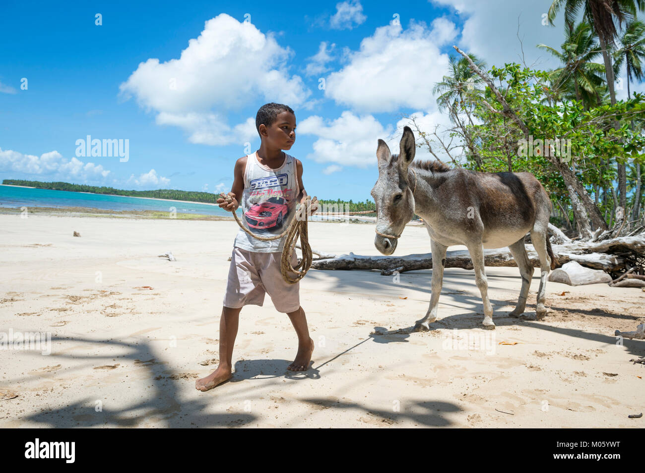 BAHIA, BRAZIL - MARCH 11, 2017: A young Brazilian leads a mule on the palm fringed shore of a beach in the remote - Stock Image