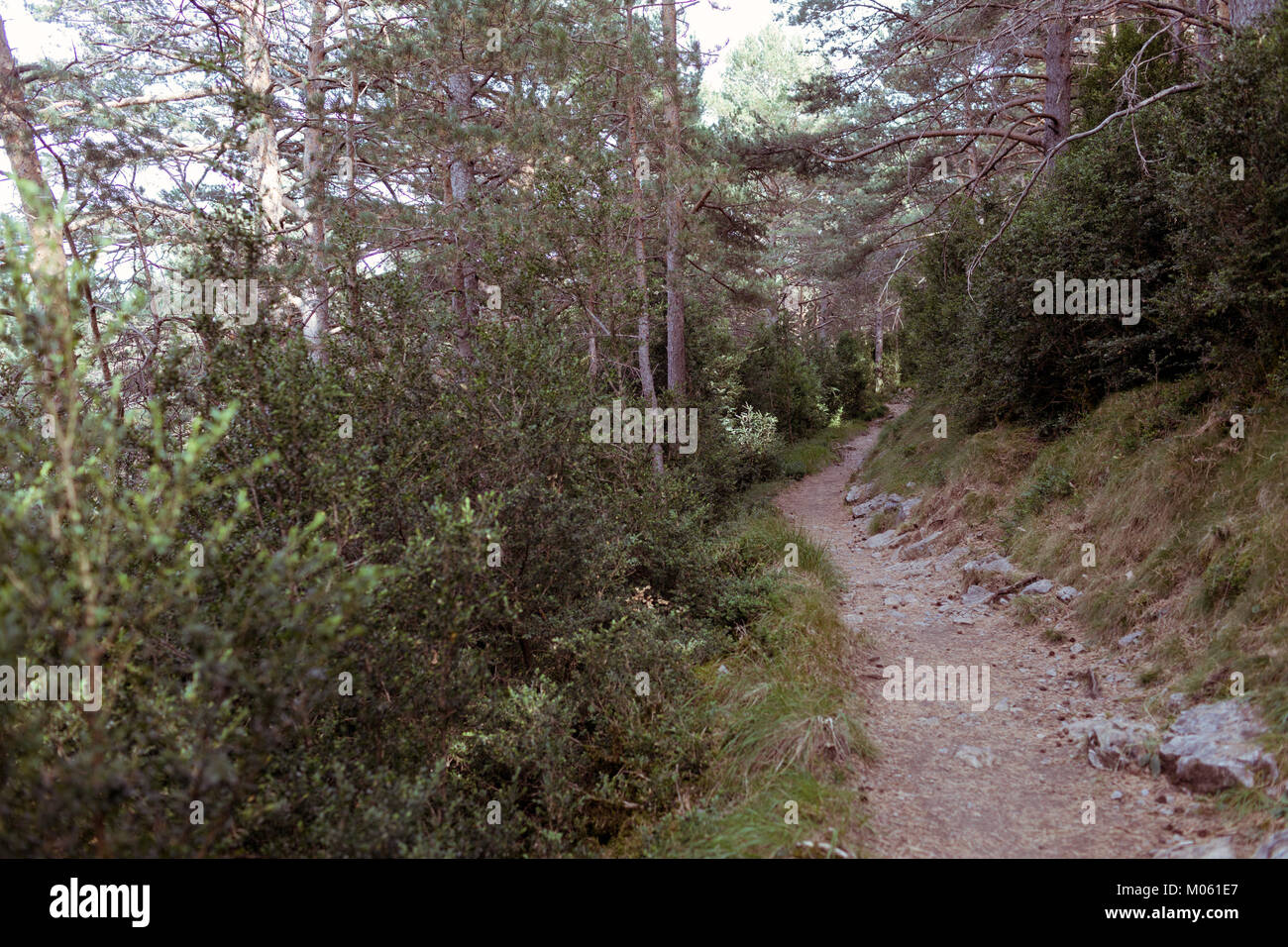 Narrow path going through forest on sunny day. Stock Photo