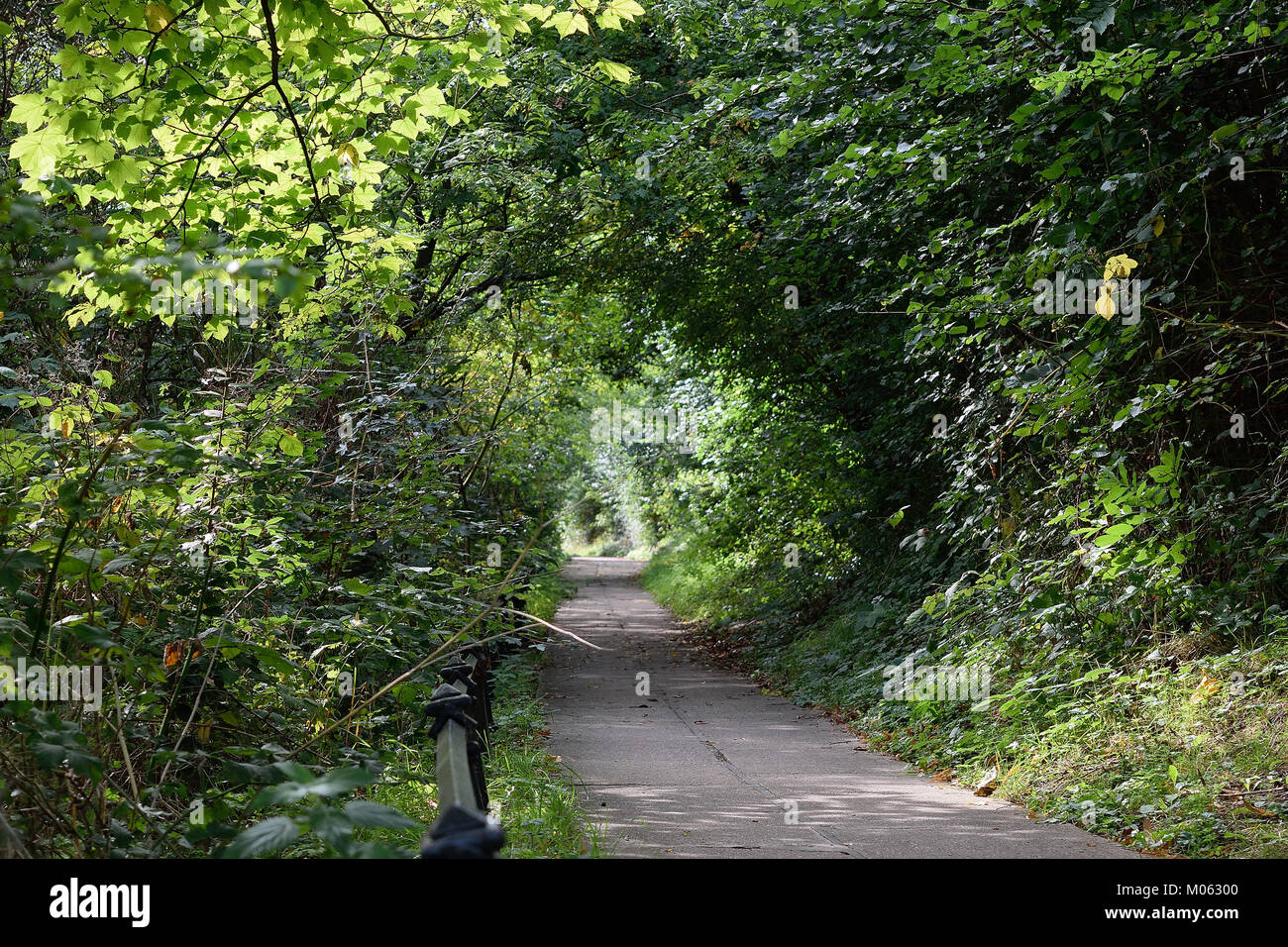 Vegetation tunnel, lonely road leading to light - Stock Image