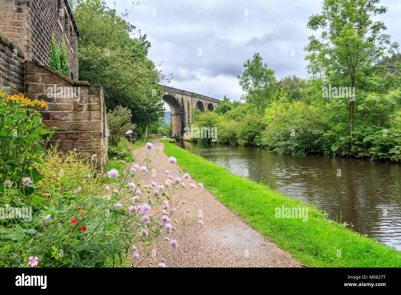 Wild flowers, towpath, viaduct over the Huddersfield Narrow Canal, Uppermill, Oldham Lancashire, England, United - Stock Image