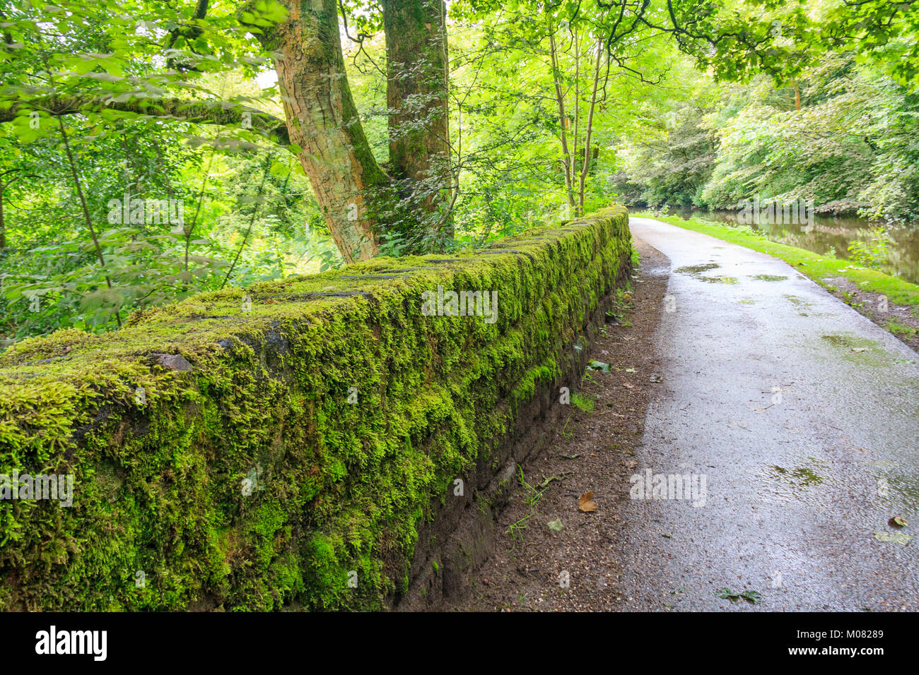 Towpath and green moss growing on stone wall, Huddersfield Narrow Canal, Uppermill, Oldham Lancashire, England, - Stock Image