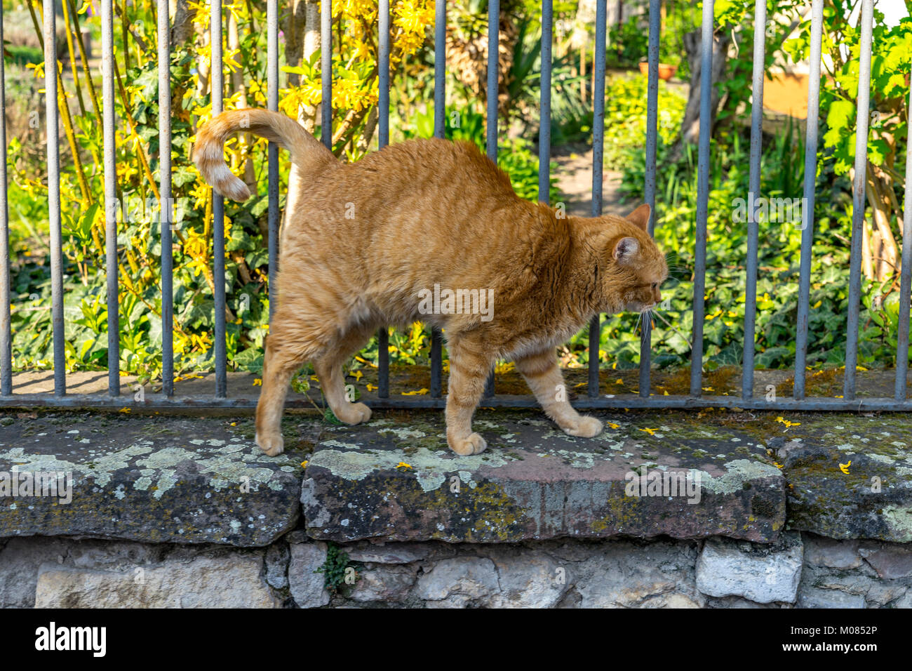 Cat On Garden Wall High Resolution Stock Photography And Images Alamy
