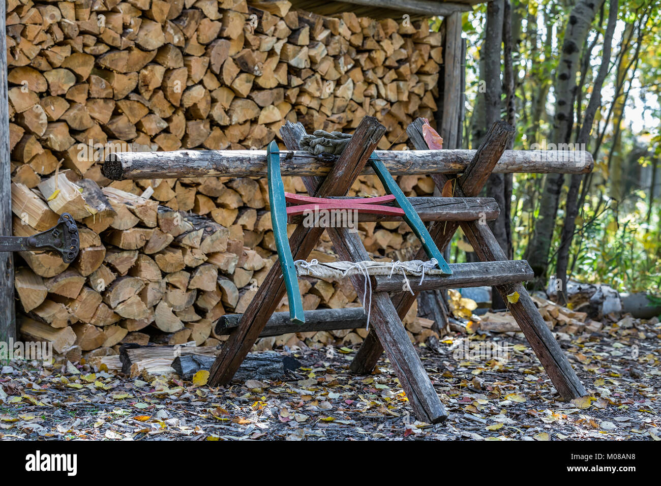A traditional bow saw or buck saw on a sawbuck or sawhorse, for holding and cutting logs for firewood, Manitoba, - Stock Image
