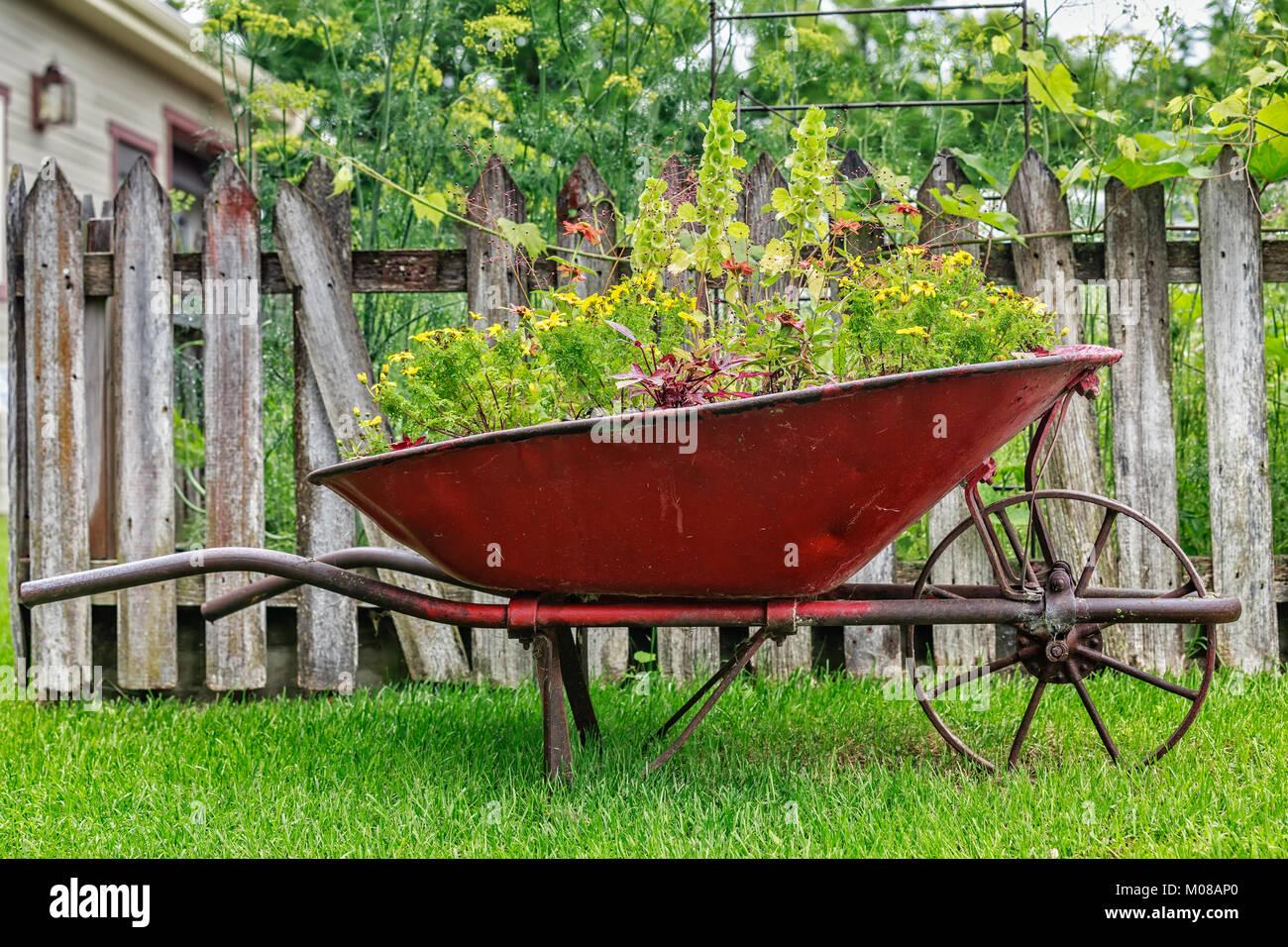 Wheelbarrow full of flowers, Manitoba, Canada. - Stock Image