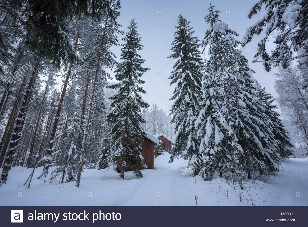 old barrack in  an winter forest landscape - Stock Image